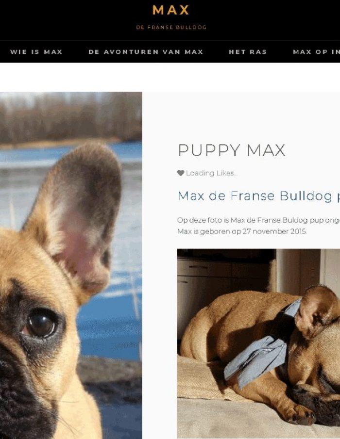 Portfolio-Wordpress-Webdesginer-Jcmwebdesign-Franse-Bulldog-Max