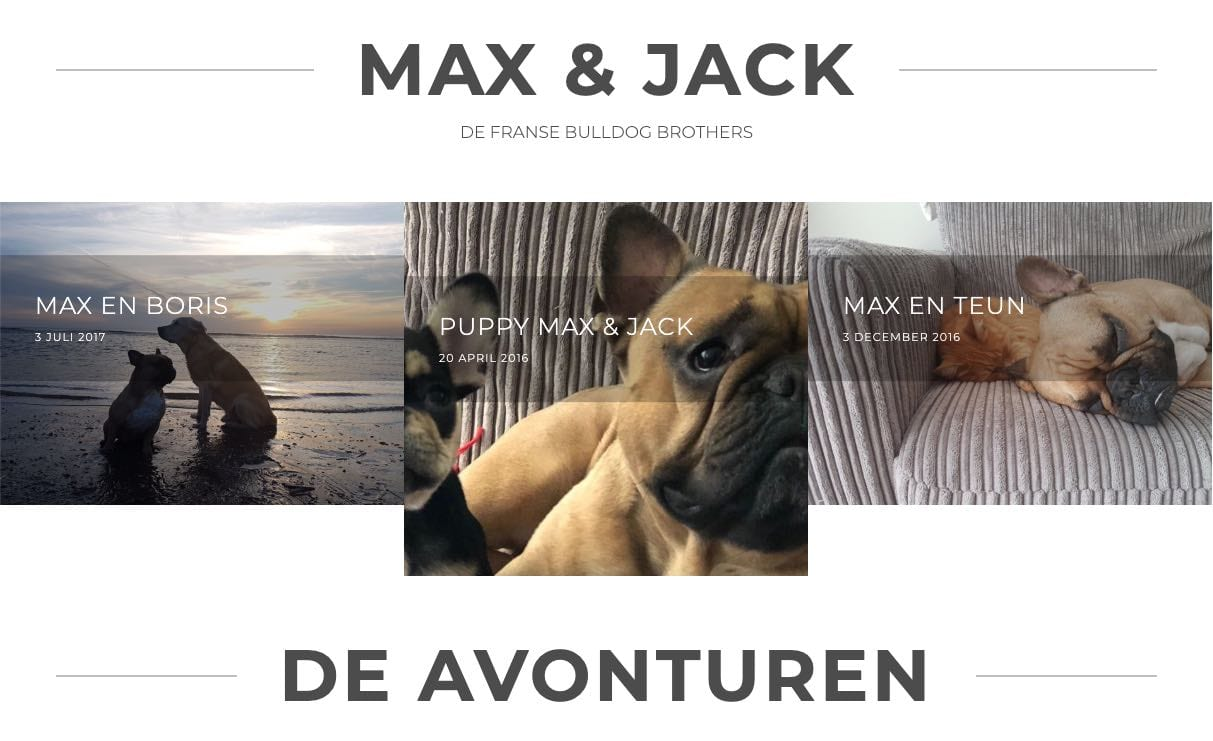 Portfolio-Wordpress-Webdesginer-Jcmwebdesign-fransebulldog-max-jack